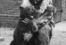 Zwierzęta, które odegrały rolę w historii. Niedźwiedź Wojtek, Bucefał, Kasztanka i inne