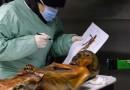 Obce DNA odkryte podczas biopsji Ötzi'ego, Człowieka z Lodu