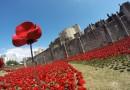 888 tysięcy czerwonych maków wymownie upamiętniło Wielką Wojnę