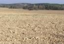 Białoruś: zaorano 1000-letnie kurhany