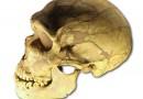 Śmiertelna choroba - czyli o tym, jak zabiliśmy neandertalczyków