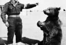 Historia niedźwiedzia Wojtka na deskach teatru w Edynburgu