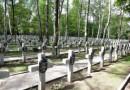 Remont na Powązkach. 1231 nowych krzyży w kwaterach z 1920 roku