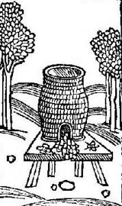 Średniowieczne bartnctwo